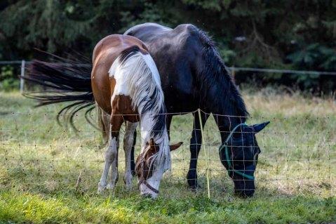 Pferde auf den Wiesen an der Recknitz (c) Frank Koebsch (6)