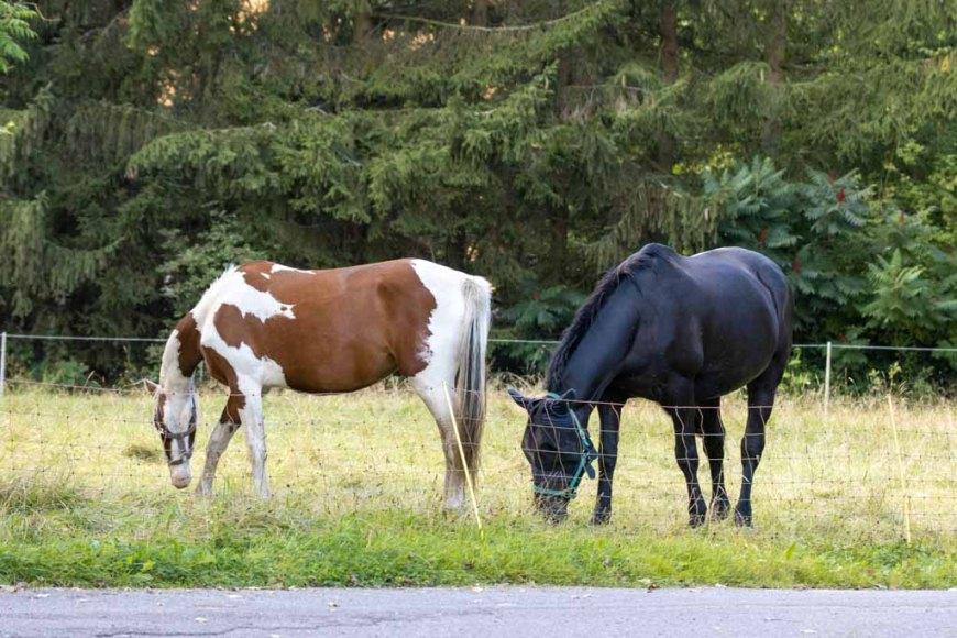 Pferde auf den Wiesen an der Recknitz (c) Frank Koebsch (7)