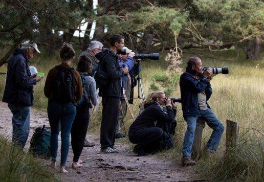 Fotografen auf der Pirsch nach Rothirschen am Darßer Ort (c) Frank Koebsch (1)
