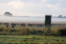 Kühe im Nebel auf den Wiesen des Mönchguts (c) Frank Koebsch (3)