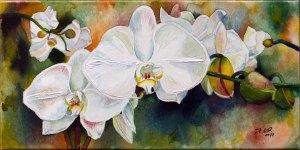 Weiße Orchideen (c) Aquarell auf Leinwand von Frank Koebsch