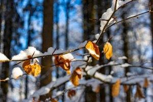 Schneebedeckte Zweige (c) FRank Koebsch (1)