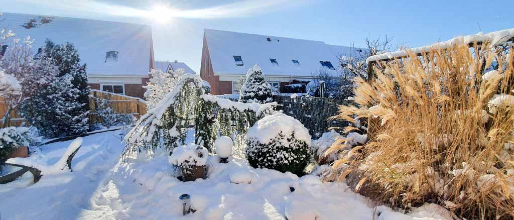 Wintermorgen in Sanitz (c) Frank Koebsch