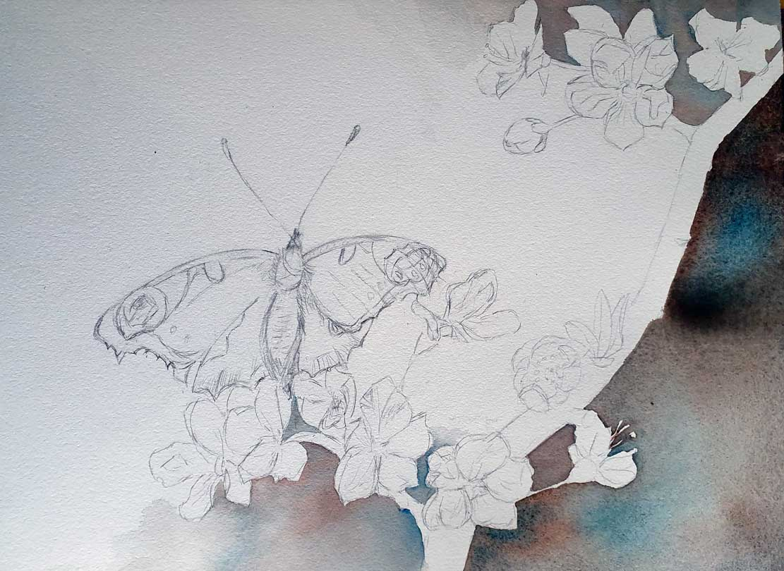 """Das Aquarell """"Ein Schmetterling nascht an den ersten Obstblüten"""" entsteht – Anlegen des Hintergrundes © Frank Koebsch (2)"""