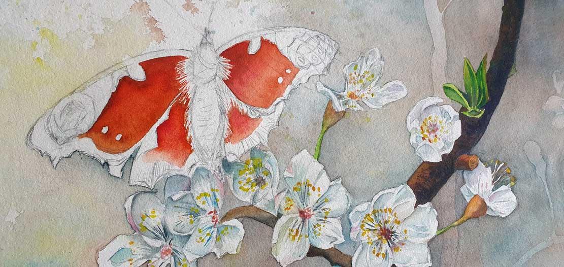 """Das Aquarell """"Ein Schmetterling nascht an den ersten Obstblüten"""" entsteht – Die ersten Farben für den Schmetterling © Frank Koebsch"""