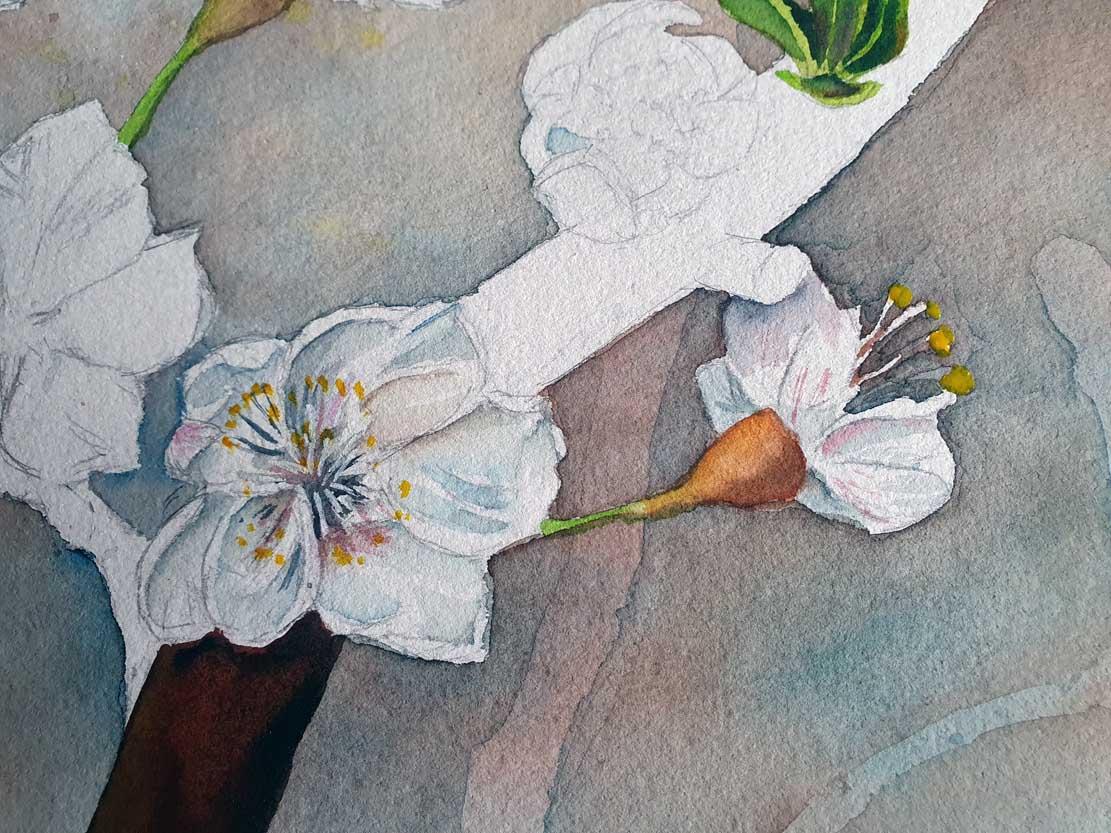 """Das Aquarell """"Ein Schmetterling nascht an den ersten Obstblüten"""" entsteht – Lasuren geben den Blüten Volumen © Frank Koebsch (5)"""