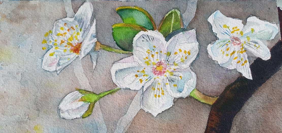 """Das Aquarell """"Ein Schmetterling nascht an den ersten Obstblüten"""" entsteht – Lasuren geben den Blüten Volumen © Frank Koebsch (6)"""