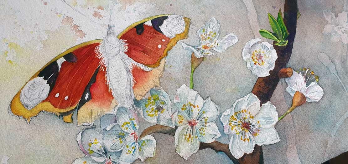 """Das Aquarell """"Ein Schmetterling nascht an den ersten Obstblüten"""" entsteht – Lasuren gestalten den Schmetterling © Frank Koebsch (6)"""