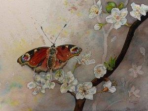 Ein Schmetterling nascht von den ersten Obstblüten © Aquarell von Frank Koebsch