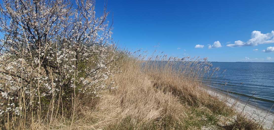 Frühling auf den Boddenwiesen bei Wustrow (c) FRank Koebsch