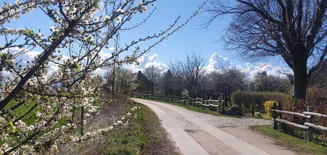 Frühling in Wustrow (c) Frank Koebsch (2)