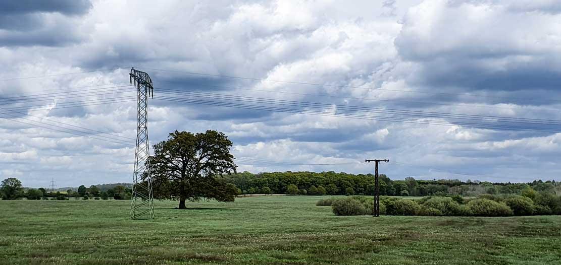 Hochspannungsmast mit Nisthilfe für Turmfalken © Frank Koebsch (2)