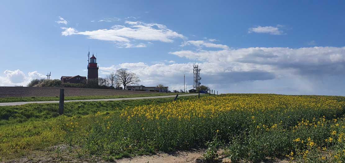 Rapsfeld auf dem Signalberg vor den Leuchtturm Bastorf © Frank Koebsch (1)