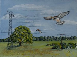 Spielwiese der Turmfalken (c) Aquarell von Frank Koebsch