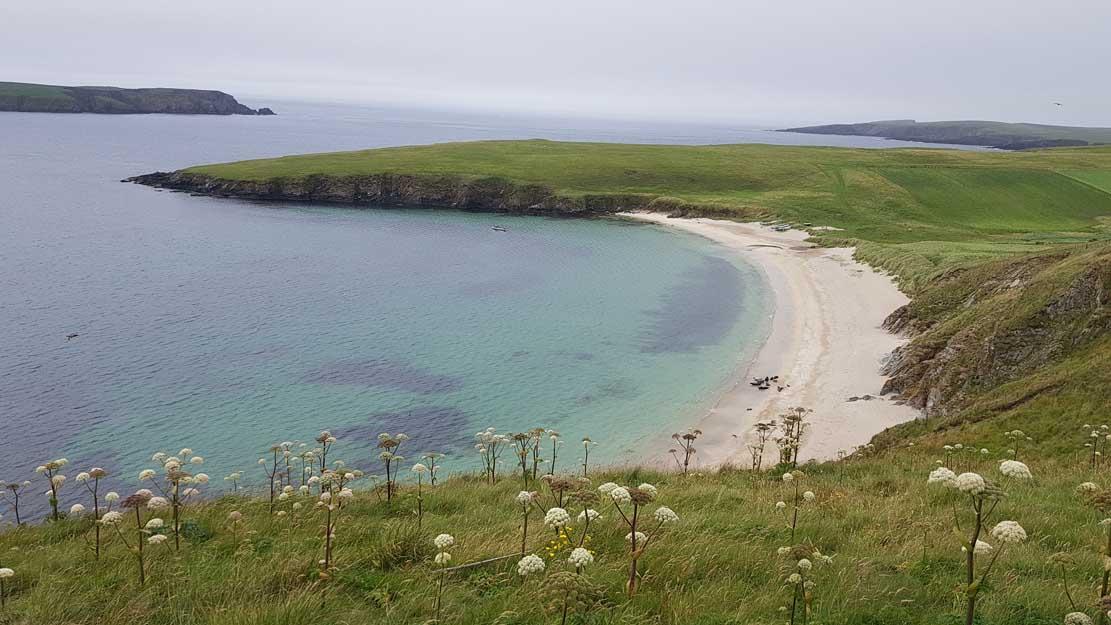 Blick auf die Küste von Lerwick mit Robben (c) FRank Koebsch (1)