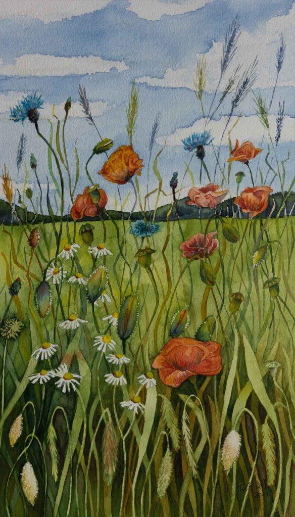 Bunte Sommerwiese (c) ein Mohn Aquarell von Frank Koebsch