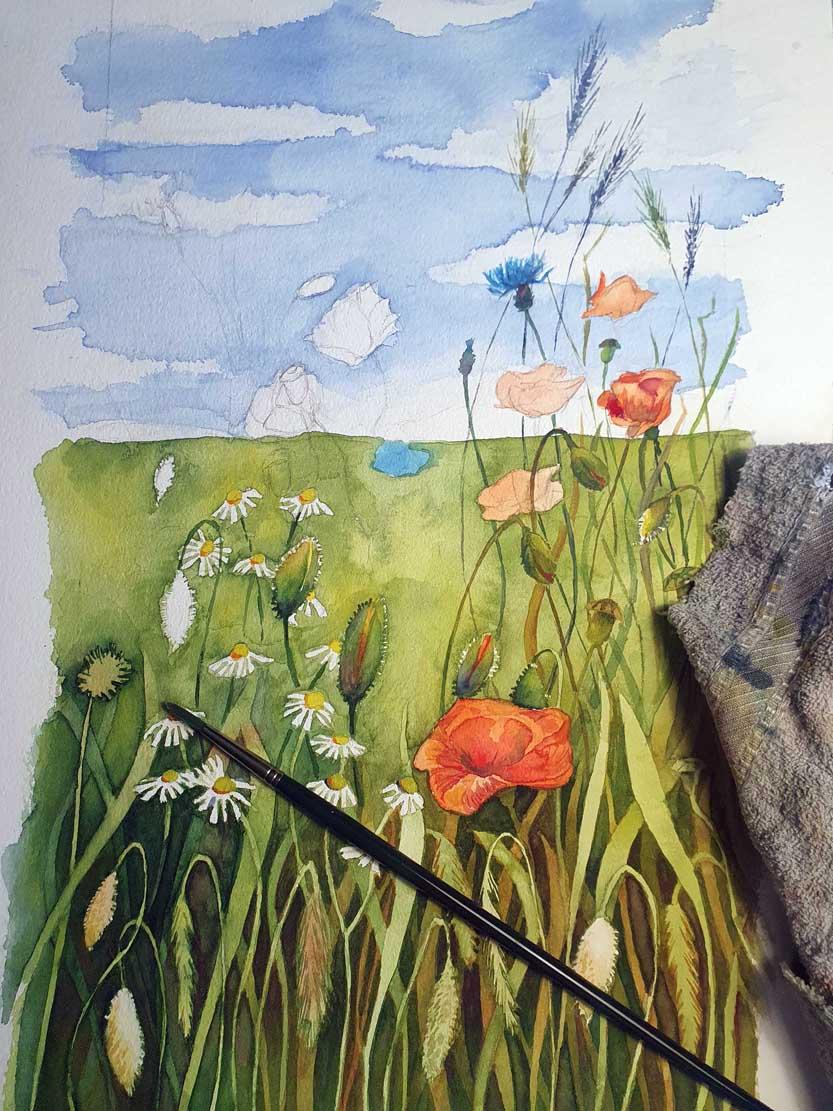 Die Kamillenblüten und Mohnkapseln bekommen ihre Farben im Aquarell - Bunte Sommerwiese (c) Frank Koebsch (1)