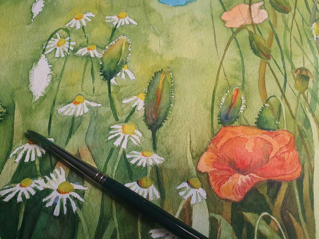 Die Kamillenblüten und Mohnkapseln bekommen ihre Farben im Aquarell - Bunte Sommerwiese (c) Frank Koebsch (2)