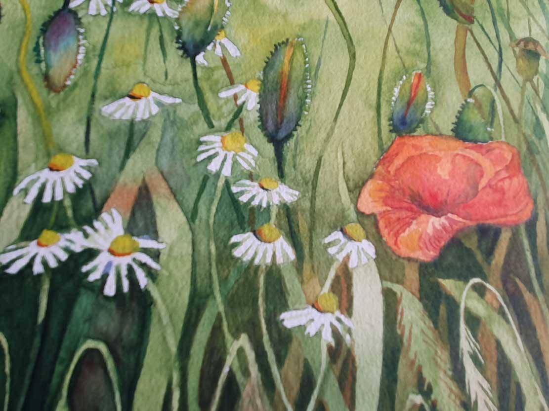 Die Kamillenblüten und Mohnkapseln bekommen ihre Farben im Aquarell - Bunte Sommerwiese (c) Frank Koebsch (3)