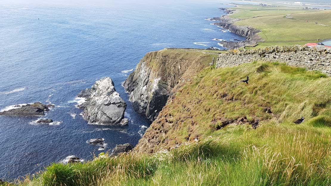 Küste auf Lerwick bei Sumburgh Head mit brütenden Papageitauchern (c) Frank Koebsch (1)