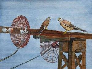 Spielplatz der Turmfalken (c) Aquarell von Frank Koebsch