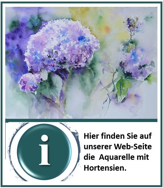 Hortensien Aquarelle