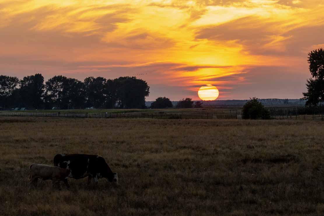 Sonnenuntergang über den Boddenwiesen an der Barther Oie (c) FRank Koebsch (2)